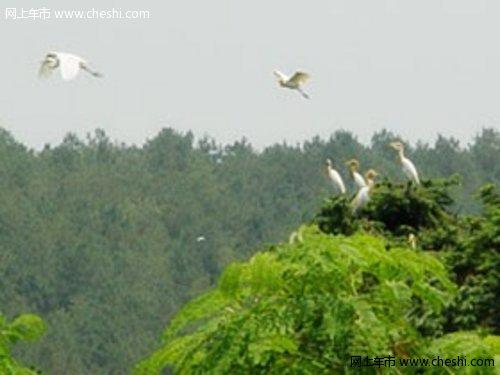 【活动时间】 2010年6月19日  【活动地点】来安白鹭岛  【活动对像