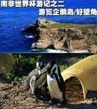 南非世界杯游记之二 游览企鹅岛/好望角