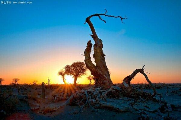由于自然因素,大片枯死的胡杨树东倒西歪,神态各异,其奇异的造型给人