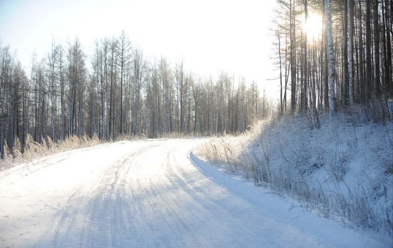 白桦林大道,如此美丽的风景; 途锐2011巅峰之旅 体验呼伦贝尔冰雪三